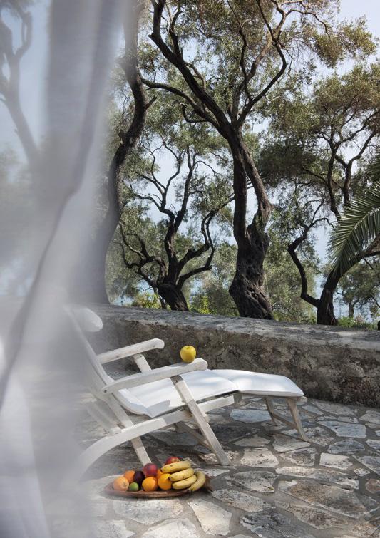 CRF_04_olive-grove-feeling_281