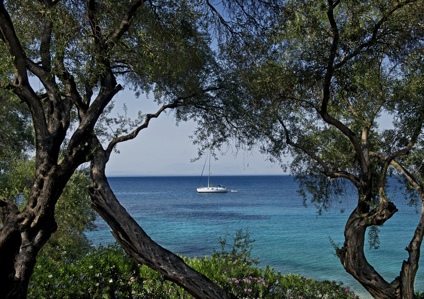 CRF_04_olive-grove-view-of-sailing-boat_291